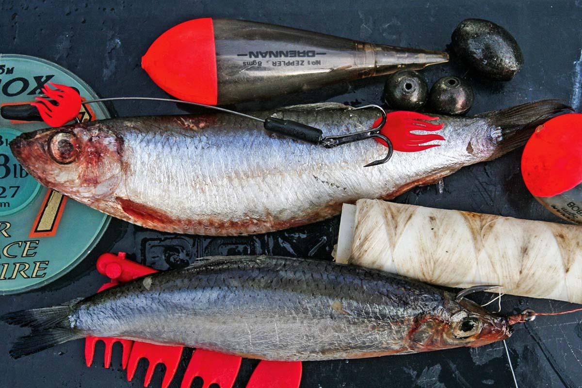 Sprotten sind nicht sehr groß, punkten aber dort als Hechtköder, wo die Hechte sich auf Kleinfische spezialisiert haben. Wegen ihres weichen Fleisches sollte man sie mit ein paar Windungen Gummiband am Haken sichern. Foto: D. Charman