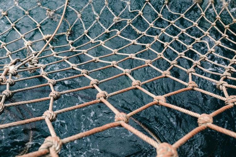 Die von der EU-Kommission geplanten Ostsee-Fangquoten für Berufsfischer und Meeresangler sind vom Tisch. Die aktuellen Änderungen erfährst Du hier.