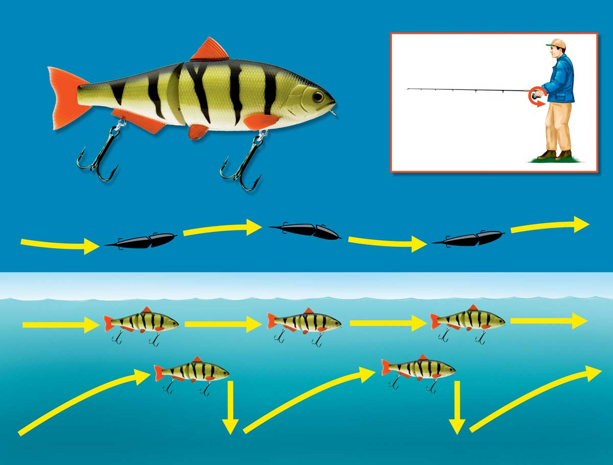 Swimbaits schwimmen in leichten Schlangenlinien. Durch gelegentliches Abstoppen und Absinkenlassen kann man den Köder noch etwas interessanter machen. Grafik: BLINKER/R. Jahnke