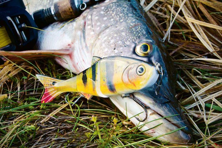 Swimbaits liegen voll im Trend. Diese Kunstköder können an manchen Tagen den Unterschied zwischen Fangen und Nichtfangen ausmachen. Foto: W. Krause