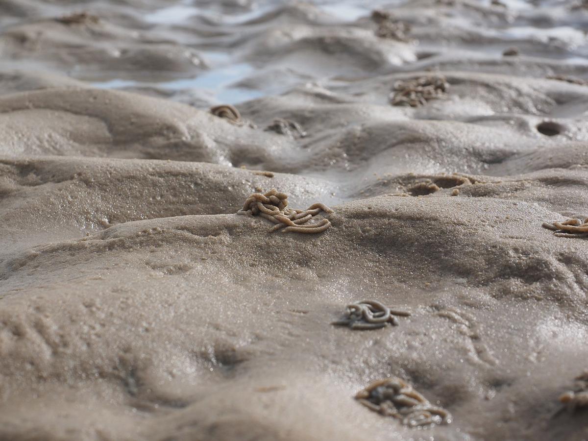So sieht es im klaren Ostseewasser im Idealfall am Sandgrund aus. Die viele Häufchen der Wattwürmer zeigen die richtigen Stellen an.