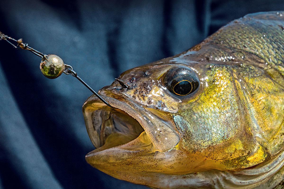 Der Cheburashka-Jig ist die perfekte Montage zum Angeln auf Raubfische. Foto: W. Krause