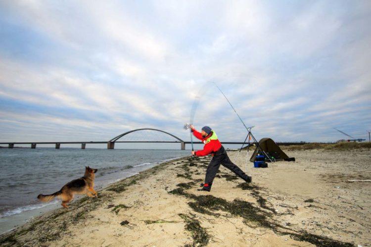 Beim Angeln auf Fehmarn, kann jeder Angler seinen Zielfisch fangen! Foto: Blinker/Lars Berding