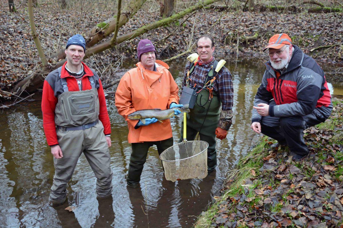 Projekt am Lachsbach: Kalle Rohde (rechts) begleitet das Elektofischen am Lachsbach, das wichtigste Laichrevier für Lachs und Meerforelle in der Neustädter Bucht.