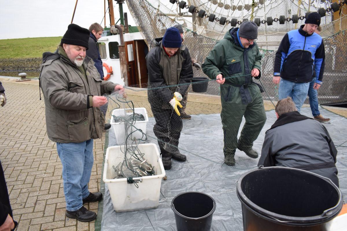 Im Greetsieler Hafen wurden die einzelnen Fischarten bestimmt und das Ergebnis der Netzfänge ausgewertet. Foto: E. Jibben