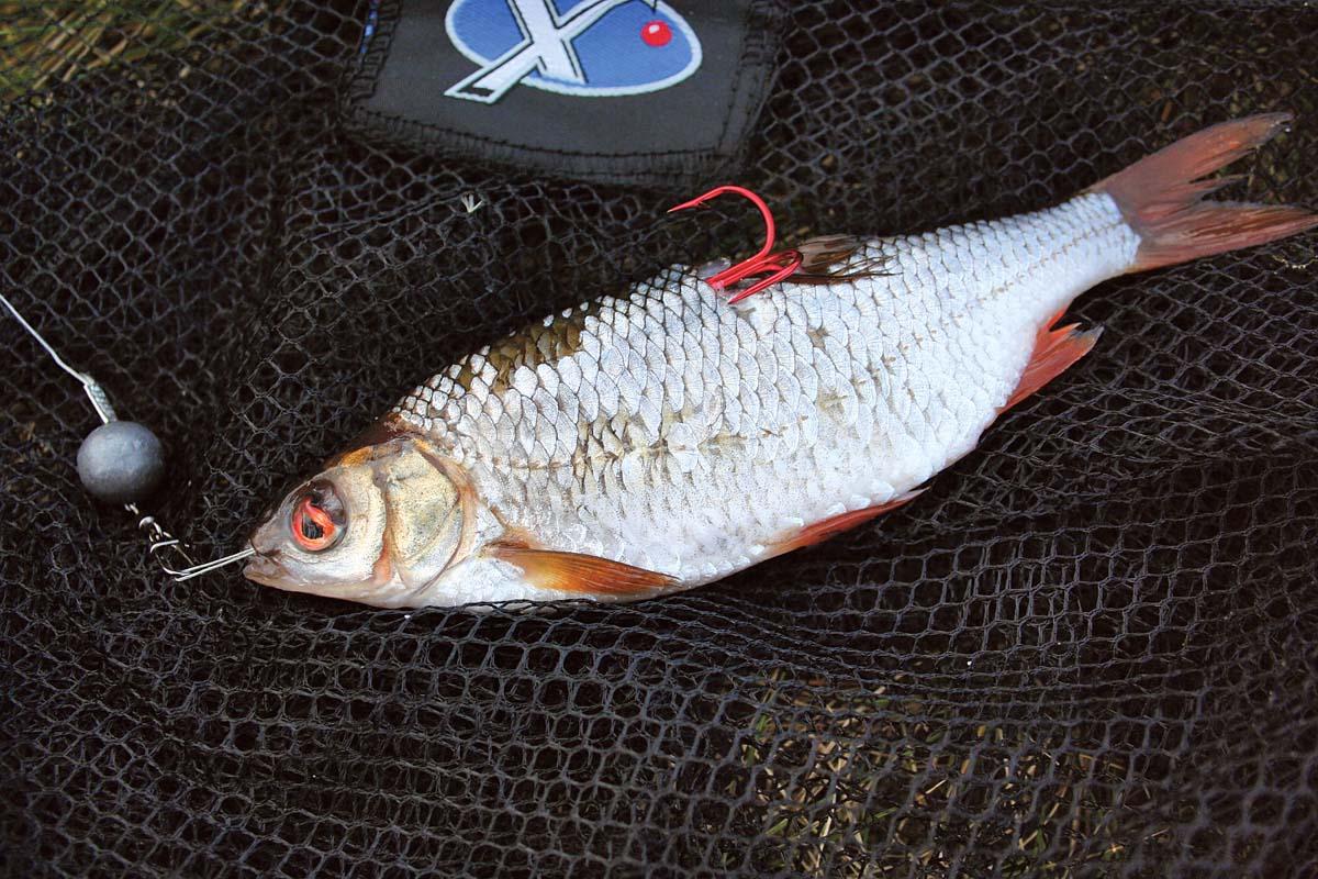 Nachdem man das Vorfach in der Öse der Ködernadel befestigt hat, wird es durch das Fischchen gezogen. Nun das Vorfach in den Karabinerwirbel einhängen – und los geht's. Foto: G. Duwe