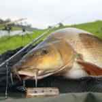 Beim Barbenangeln geht es zur Sache: Die Fische lieben die starke Strömung und wissen sie im Drill zu nutzen. Feedern macht dort besonderen Spaß. Foto: AW/Hauer