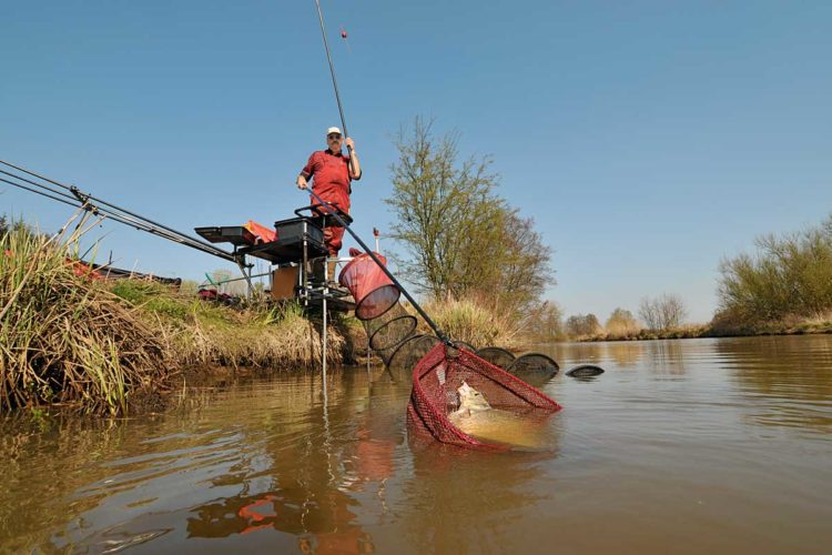 Stippen ist eine Methode, mit der man am Fluss extrem gut fangen kann. Jedoch sollte man dabei entscheidende Fehler beim Stippen vermeiden, damit man den vollen Erfolg am Wasser genießen kann. Foto: BLINKER