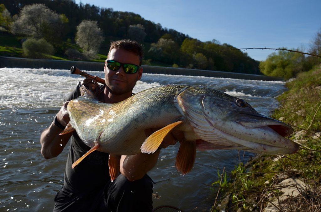 """Was Fliegenfischen auf Hecht so spannend macht? DAS! Dieses """"Flusskrokodil"""" hat Andreas Funk mit dem Streamer gefangen. Foto: A. Funk"""