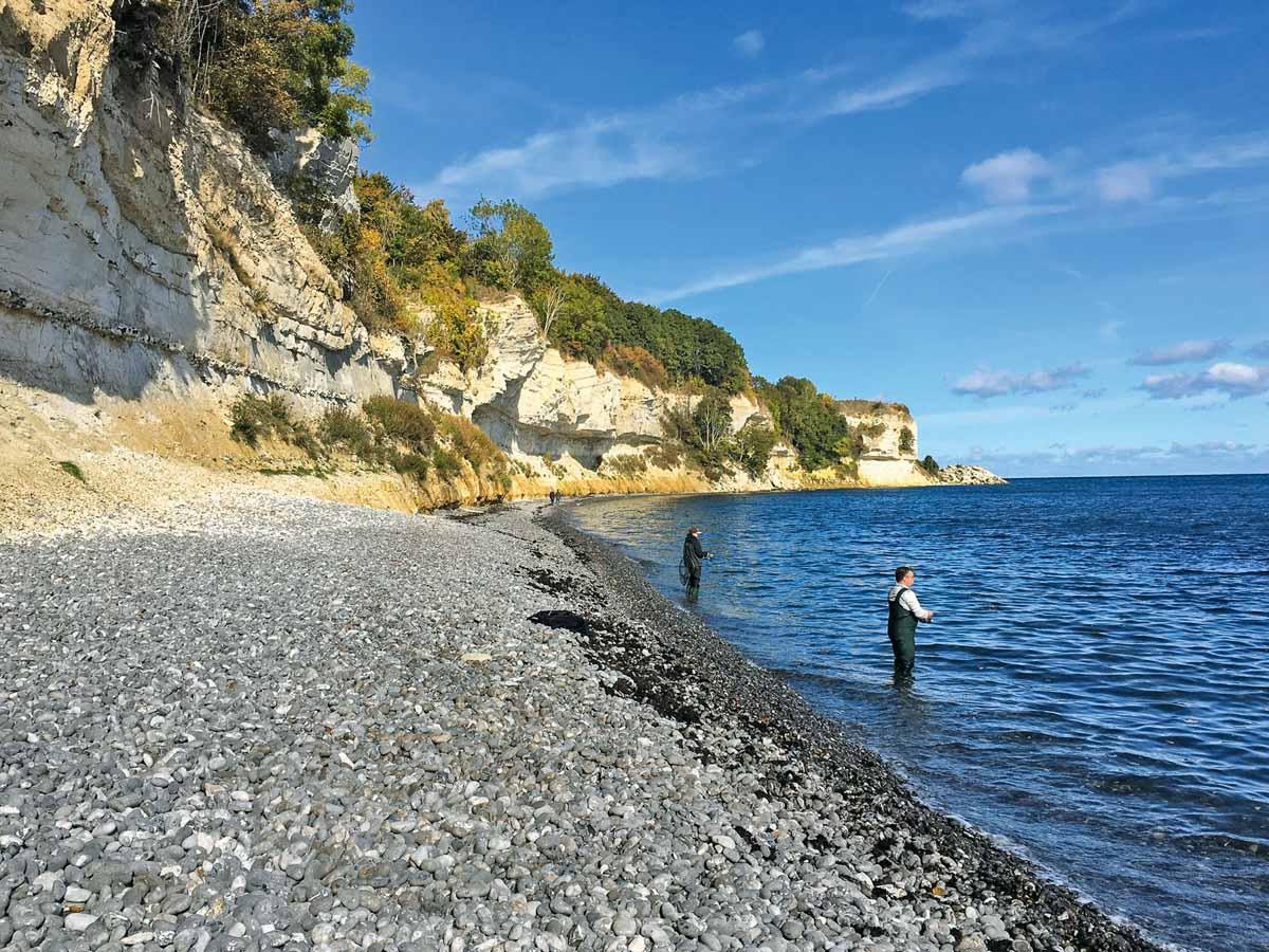 Stevns Klint – einer der Hotspots für Meerforellen. Foto: VISM