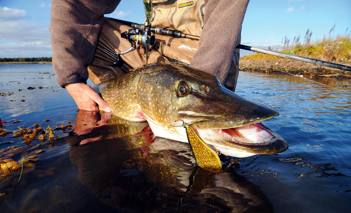 An den Mariboseen ist die Wahrscheinlichkeit hoch, einen großen Hecht vom Ufer zu fangen. Fotos: Naturaaktiv.com
