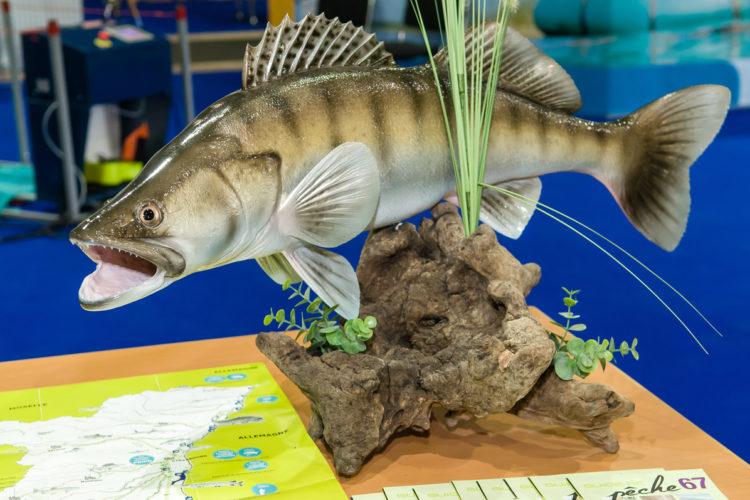 Taucht auf der Wild&Fisch ein, in eine faszinierende Erlebniswelt zwischen Ambiente, Action und spannenden Fachvorträgen, die durch zahlreiche Verbände aus Deutschland, Frankreich und der Schweiz leidenschaftlich mitgestaltet wird.