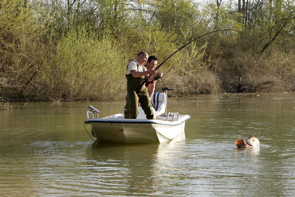 Ein stattlicher Frankreich-Wels hängt am Haken. In den Gewässersystemen wurden schon einige Bartelträger mit mehr als 100 Kilogramm Gewicht gefangen.