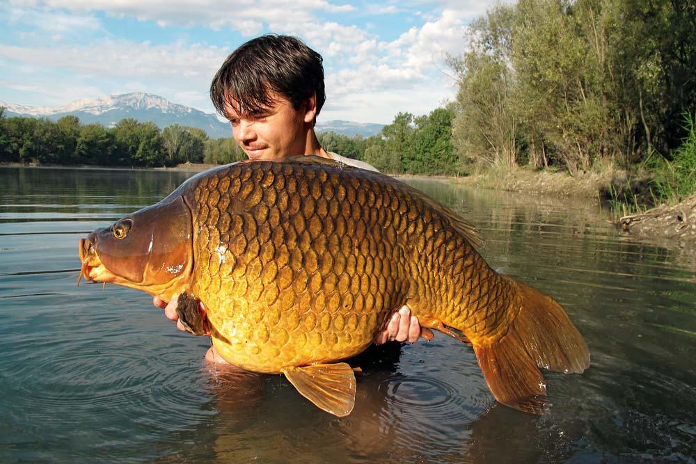 Dieser kapitale Fische wurde beim Angeln in Frankreich vom Badeboot gedrillt.