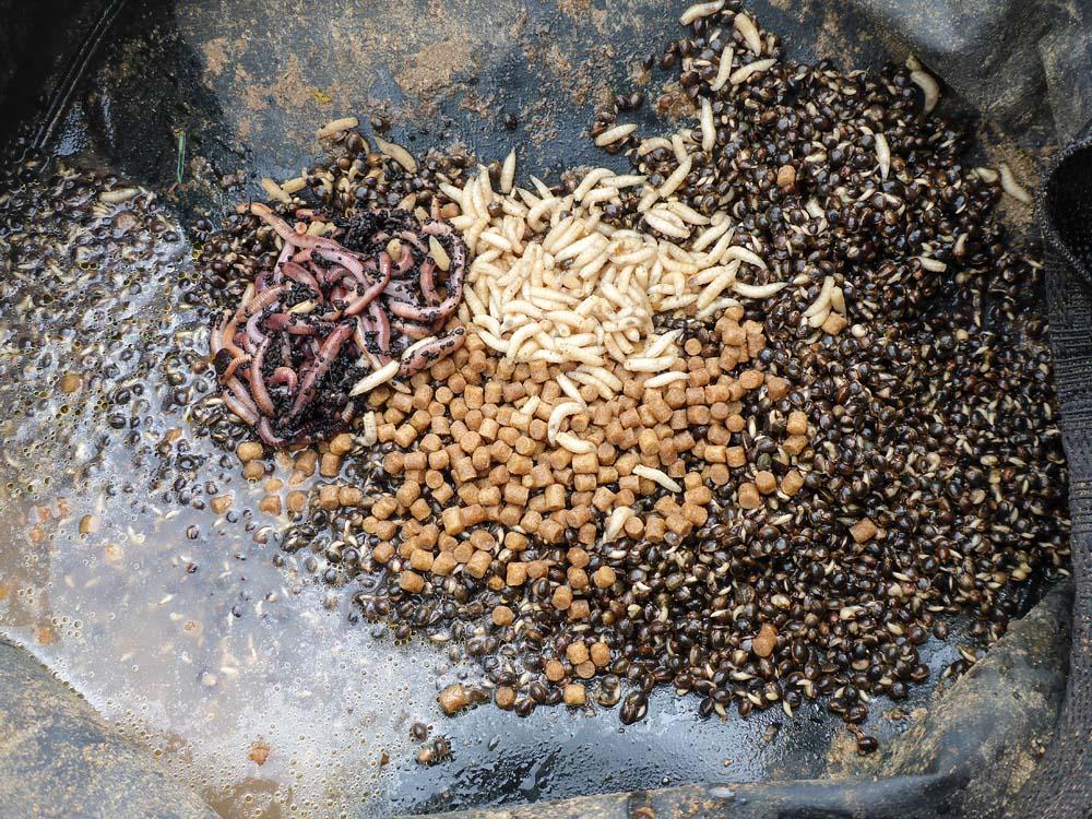 Die Zutaten für das Schleienfutter: Hanf als Basis, Mikro-Pellets, tote Maden und Rotwürmer. Das ölige Wasser des Hanfs eignet sich hervorragend, um das Grundfutter anzufeuchten.