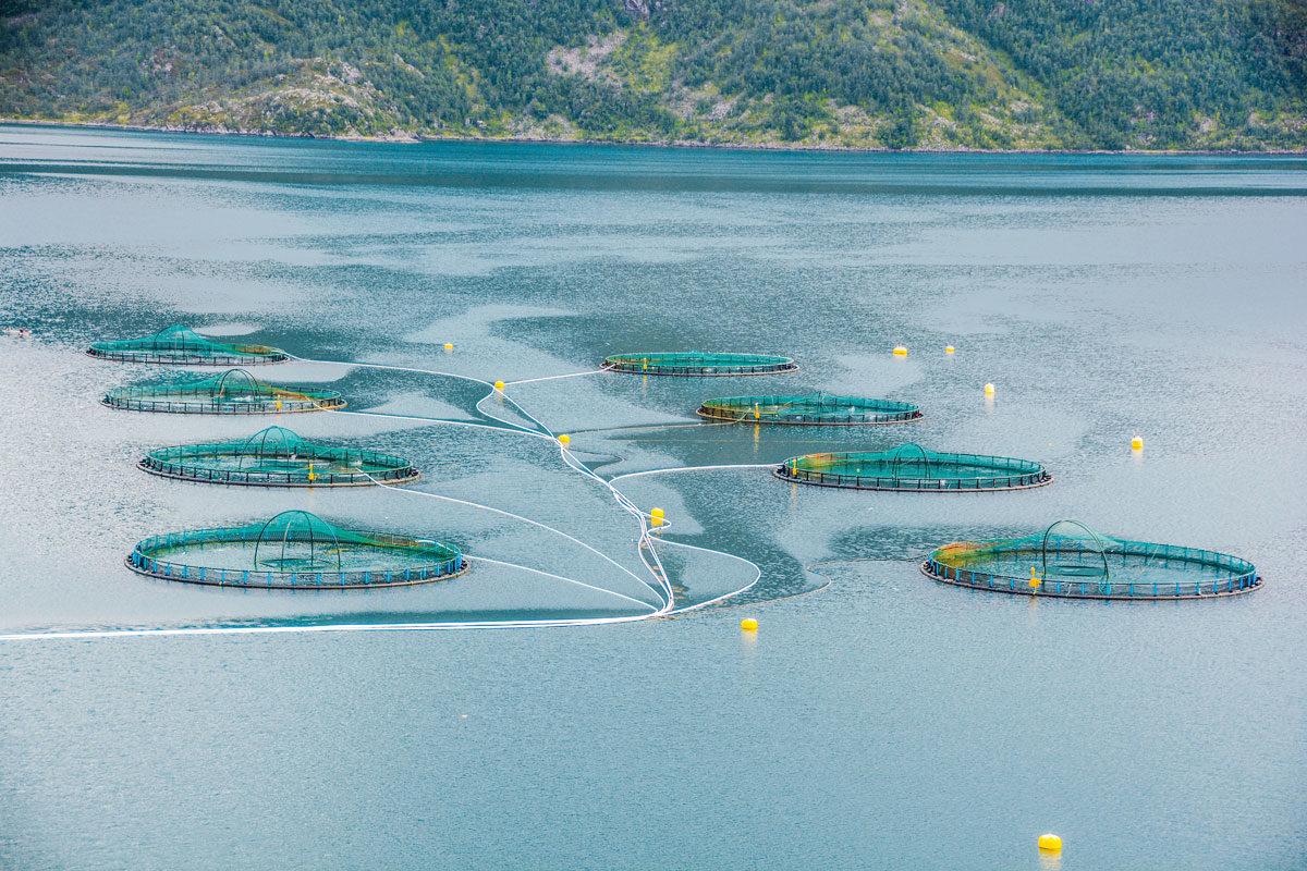 Fischfarmen sind eine große Bedrohung für die Wildbestände.