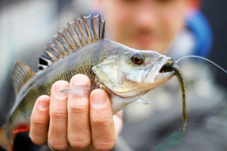 Beim leichten Streetfishing kommen dieselben Köder zum Einsatz, wie beim normalen Spinnfischen – nur alles deutlich leichter Foto: Foto: ESOX/Nathan Wattinema