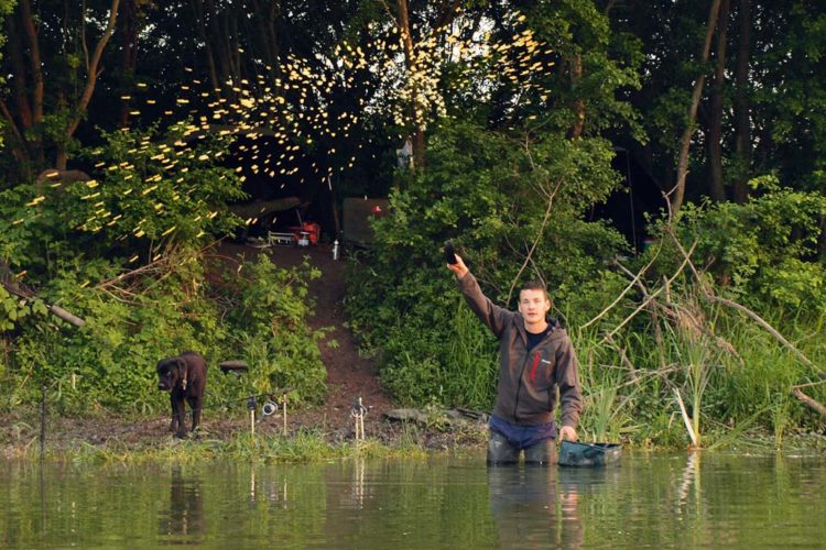 Ein Angler steht im Wasser und bedient sich der Methode des Anfütterns.