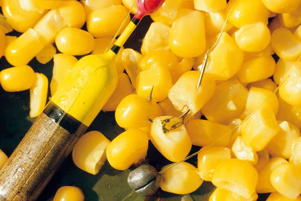 Dosenmais gehört zu den besten Schleienködern überhaupt. Die gelben Körner fangen vor allem in Kombination mit anderen Naturködern wie Würmern und Maden. Auch sie kommen ins Futter. Allerdings sättigen Maiskörner die Fische auch schnell. Deshalb sollte man nicht zu viele Körner auf dem Futterplatz haben. Am besten schießt man jede Stunde zwischen fünf und zehn Körner mit der Futterschleuder.