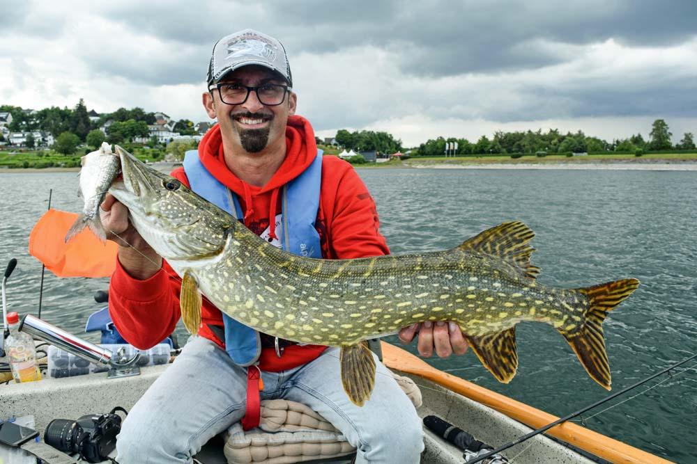 Beim Schleppen mit Köderfischen lassen sich gezielt Hechte im Freiwasser des Sorpesee fangen.
