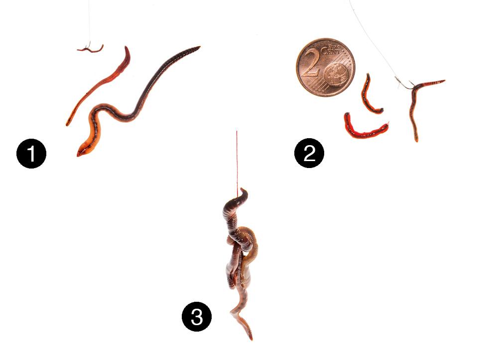 3. Zwei Tauwürmer auf einem großen Haken sind nicht nur ein Top-Aalköder, sondern bringen auch manchen (kleineren) Wels an den Greifer.