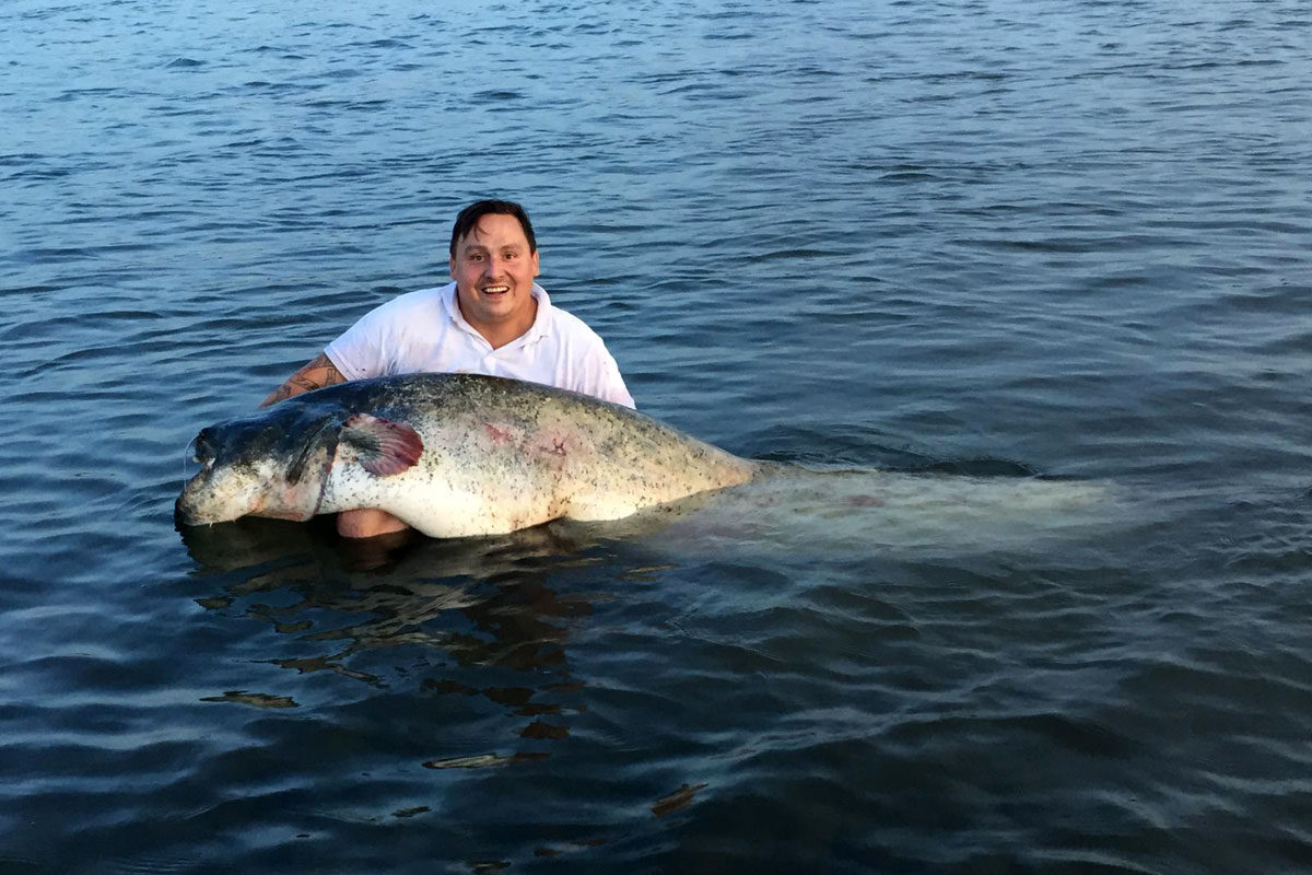 Wieder wurde ein Welsangler angezeigt, weil er ein Fisch schwimmen ließ und es der örtlichen Presse mitteilte. Das Tier hatte eine Länge von 2,21 Meter und wog 80-Kilogramm.