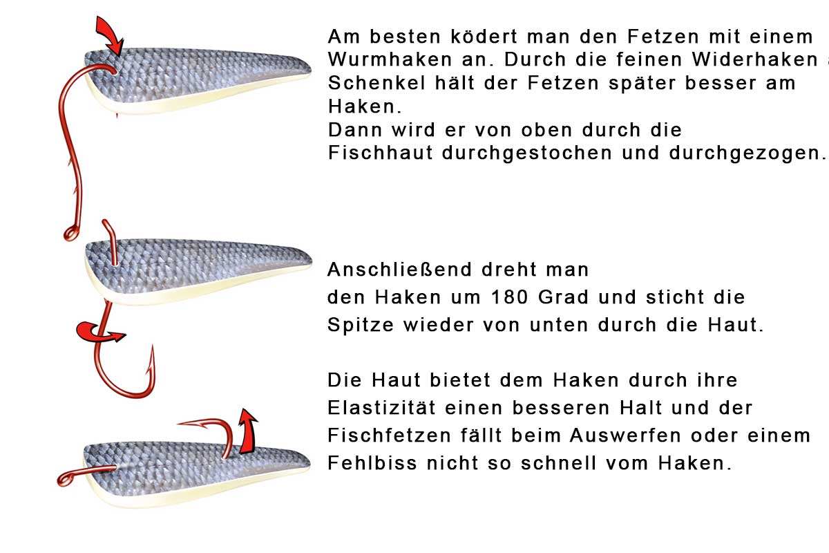 Am besten ködert man den Fetzen mit einem Wurmhaken an. Durch die feinen Widerhaken am Schenkel hält der Fetzen später besser am Haken. Dann wird er von oben durch die Fischhaut durchgestochen und durchgezogen.