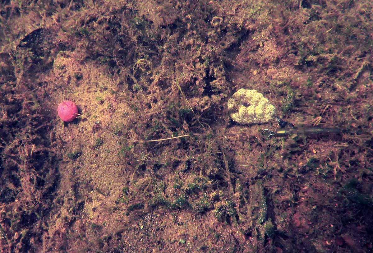 Das Blei sackte kaum in die oberste, leicht mit Kraut bewachsene, Bodenschicht ein und das Vorfach blieb schön gestreckt und größtenteils krautfrei.