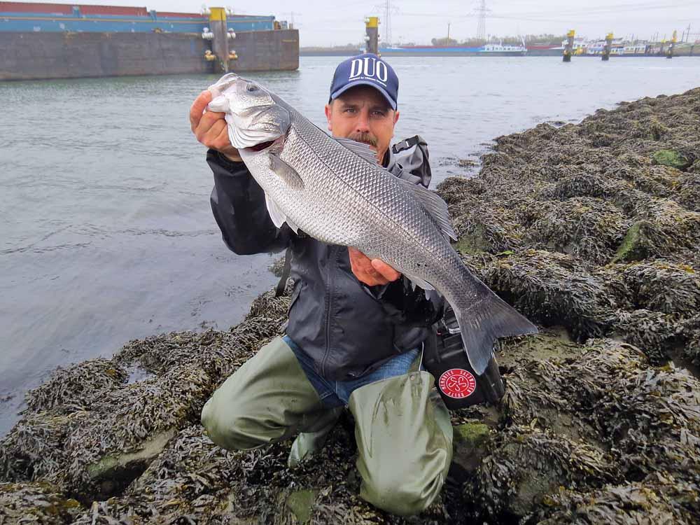 Vor allem die Hafeneinfahrten sollte man beim Wolfsbarschangeln aktiv befischen. Die Barsche ziehen umher, das sollten auch die Angler tun.