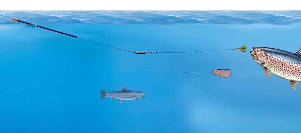 Ein Federkiel ist sensibel, aber gut sichtbar. Bei klarem Wasser und scheuen Fischen sollte die Pose besonders unauffällig sein.