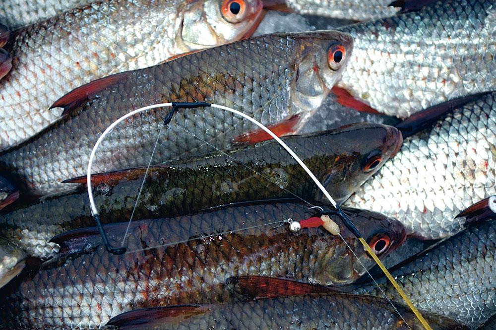 Die Spitze einer Mormyschka-Rute kann gar nicht fein genug sein. Sie zeigen die vorsichtigen Bisse der Fische sehr deutlich an.