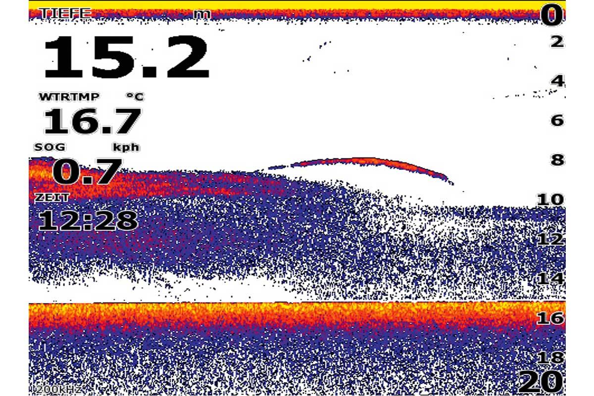Die Räuber im Waginger See lassen sich am besten mit einem Echolot ausfindig machen. Damit sucht man die Futterfischschwärme und wenn dort in der Nähe eine oder mehrere große Sicheln zu sehen sind (siehe Foto) dann hat man sie gefunden.