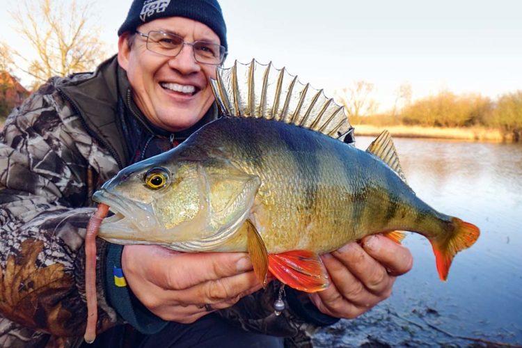 Barschangeln mit Wurm ist besonders bei beißfaulen Fischen und viel beangelten Gewässern effektiv.