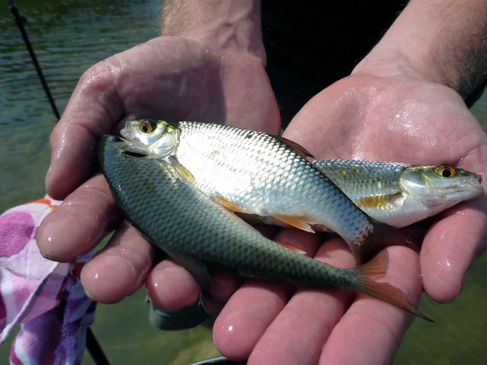 Das Köderfischangeln ist besonders im Winter in den kleineren Häfen ein Kinderspiel.