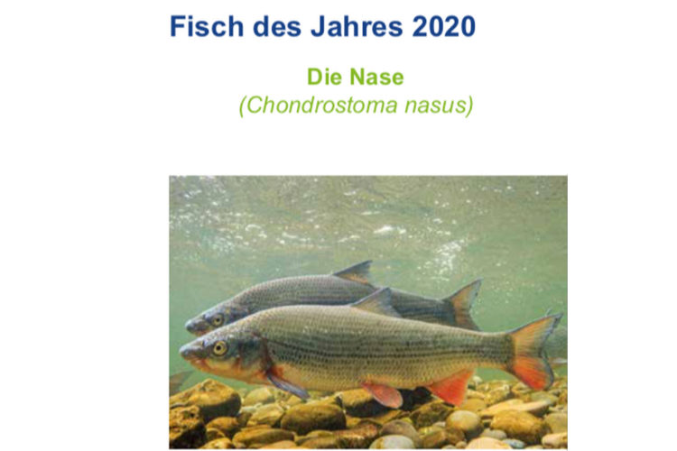 INFORMATIONSFLYER_NASE_FISCH