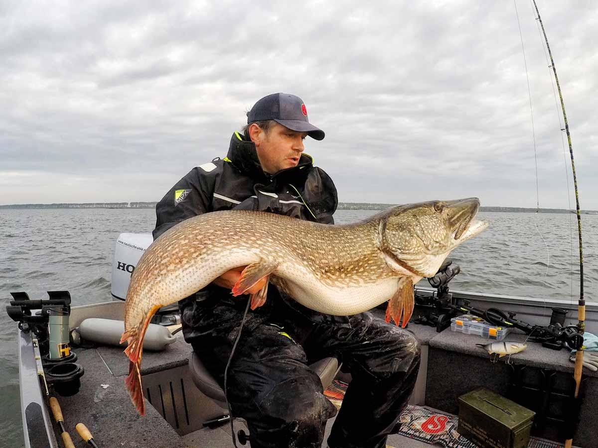 Unglaubliche 138 cm ist der neue Rekordhecht lang! Gefangen wurde er im Oktober von Siegfried Schön. Foto: Sportvisserij Nederland