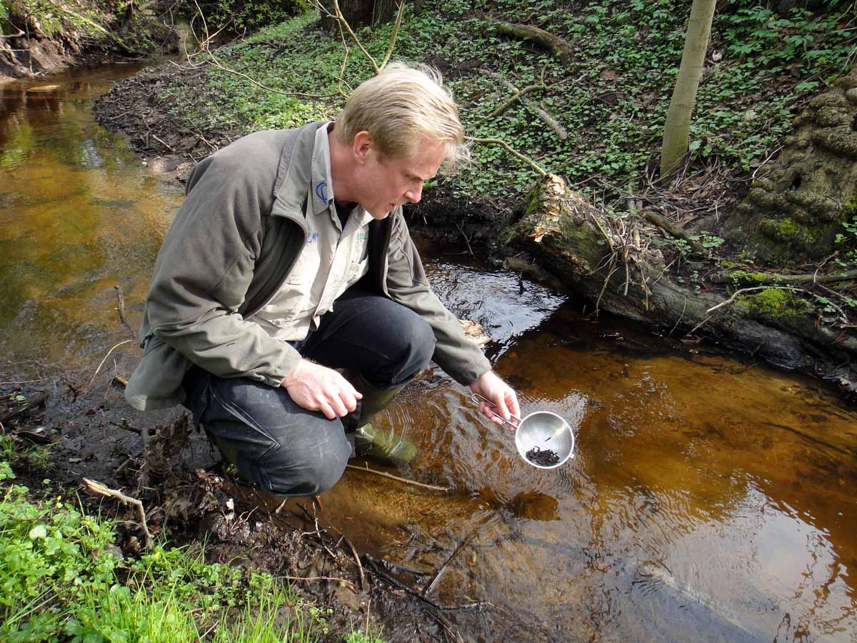 Bereits 2013 besetze Frank Schlichting zahlreiche Meerforellen in der Alster. Es ist möglich, dass der ausgewachsene Fisch aus diesem Besatz stammt. Foto: Frank Schlichting