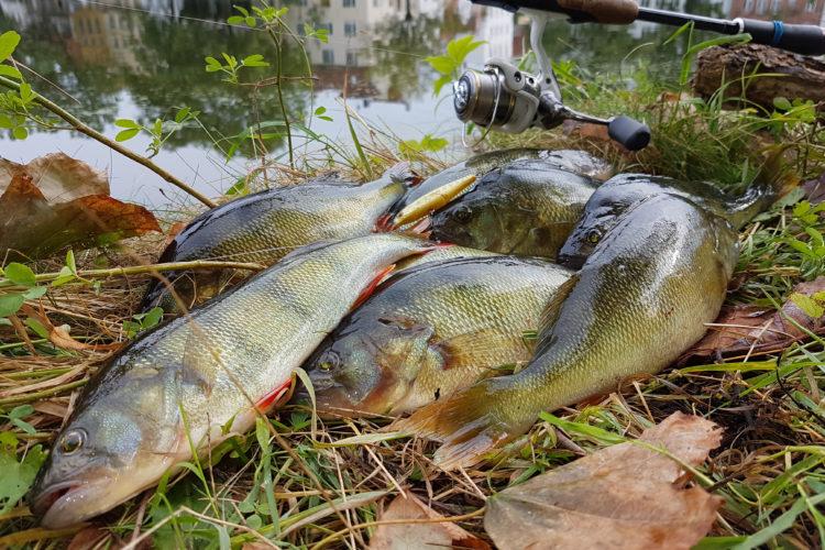 Barschangeln – kann doch jeder! Aber wie überlistet man die richtig großen Fische? Fiete Meyer gibt euch ein paar Tipps! Foto: R. Schwarzer