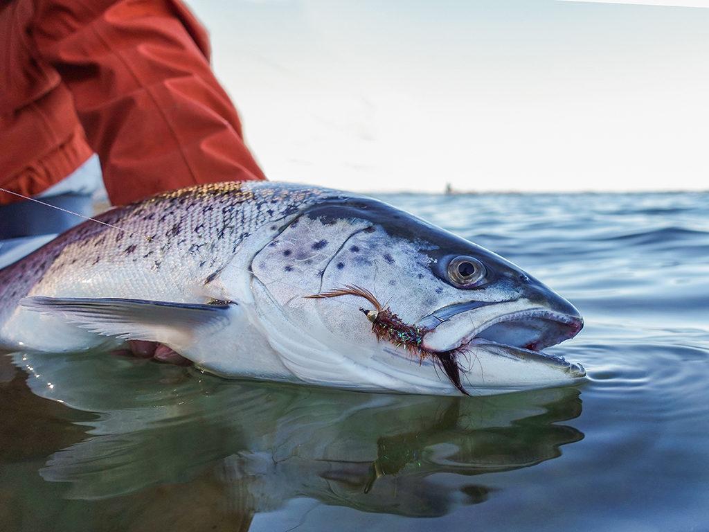 Topod Angelk/öder f/ür Forellen Nymphen mit Box 6 Farben Fliegenfischen 40 St/ück