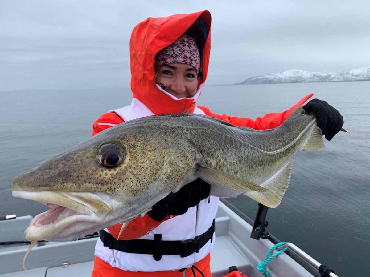 Dorsche sind neben Heilbutt und Köhler die Hauptbeute der Angler. Natürlich beißen aber auch alle anderen norwegischen Meeresfischarten regelmäßig. Foto: Borks