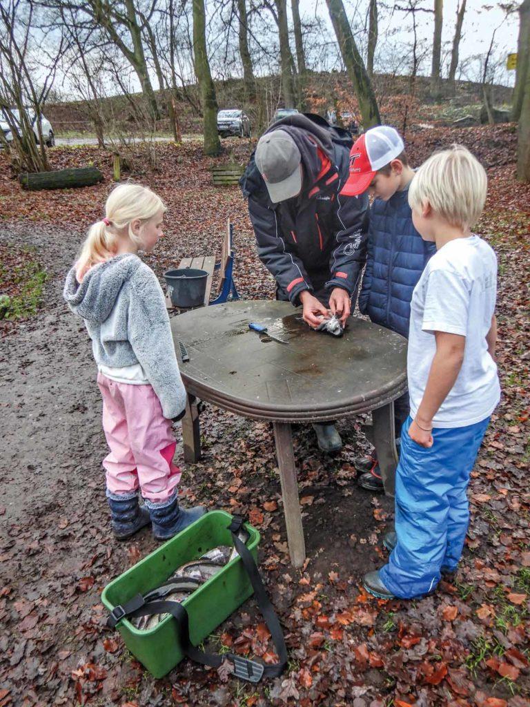 Nach dem Spaß die Arbeit. Das Ausnehmen der Fische übernehmen auch die Erwachsenen – nach anfänglicher Berührungsangst schauen alle interessiert zu. Foto: F. Schlichting