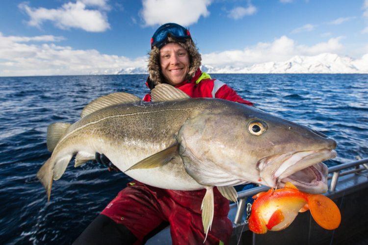 Großer Köder, großer Fisch. Diese Rechnung geht beim Skrei in der Regel auf, denn diese großen Dorsch jagen im Freiwasser andere Fischarten. Foto: M. Arnham