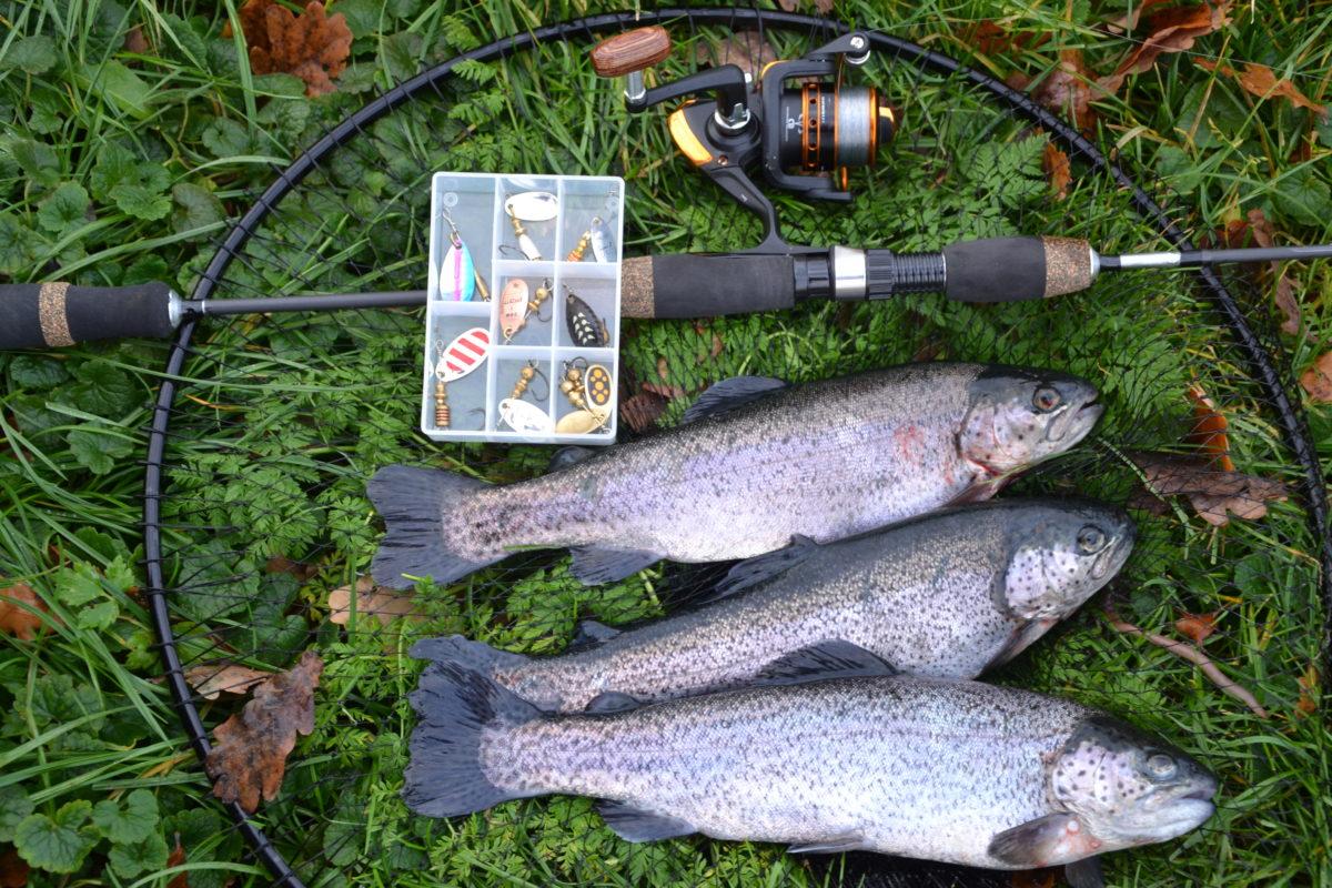 Zur Abwechslung ist diesmal das Gewicht von drei Forellen zu schätzen. Foto: AngelseeAktuell
