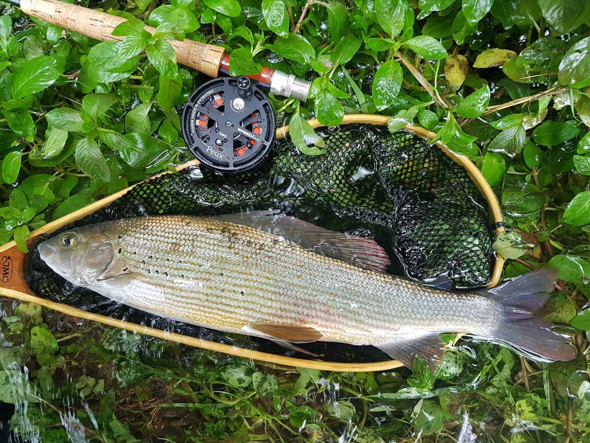 Für jeden Zielfisch gibt es das richtige Modell der PEUX Speedline. Fünf Größen sind verfügbar. Foto: PEUX Flyfishing