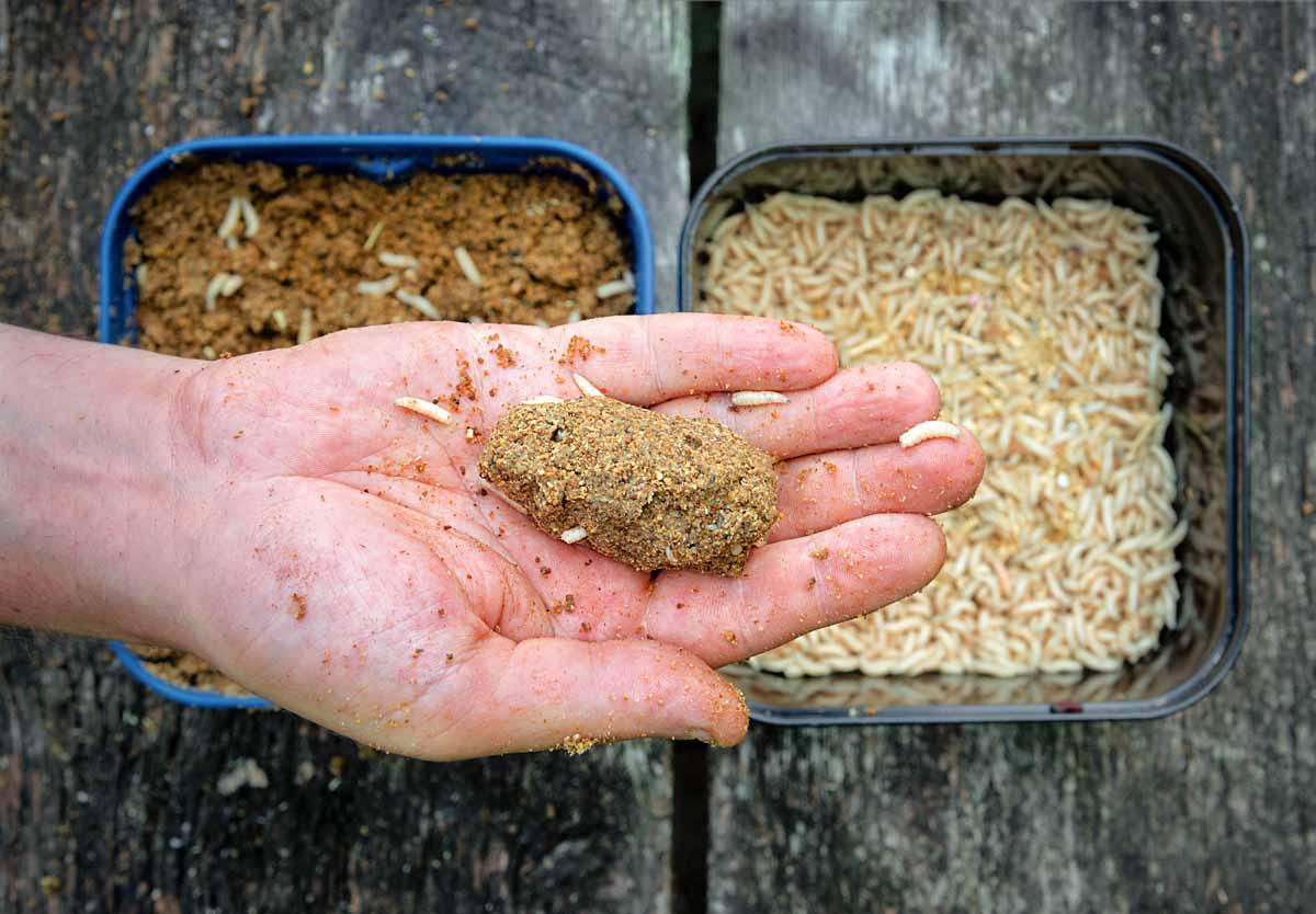 Marschverpflegung: Ein wenig Futter und einen Liter Maden – mehr braucht man nicht, um die Fische anzulocken. Ersteres wird so lange angefeuchtet, bis sich feste Ballen formen lassen. Die Maden im Futter dienen als Appetithappen.