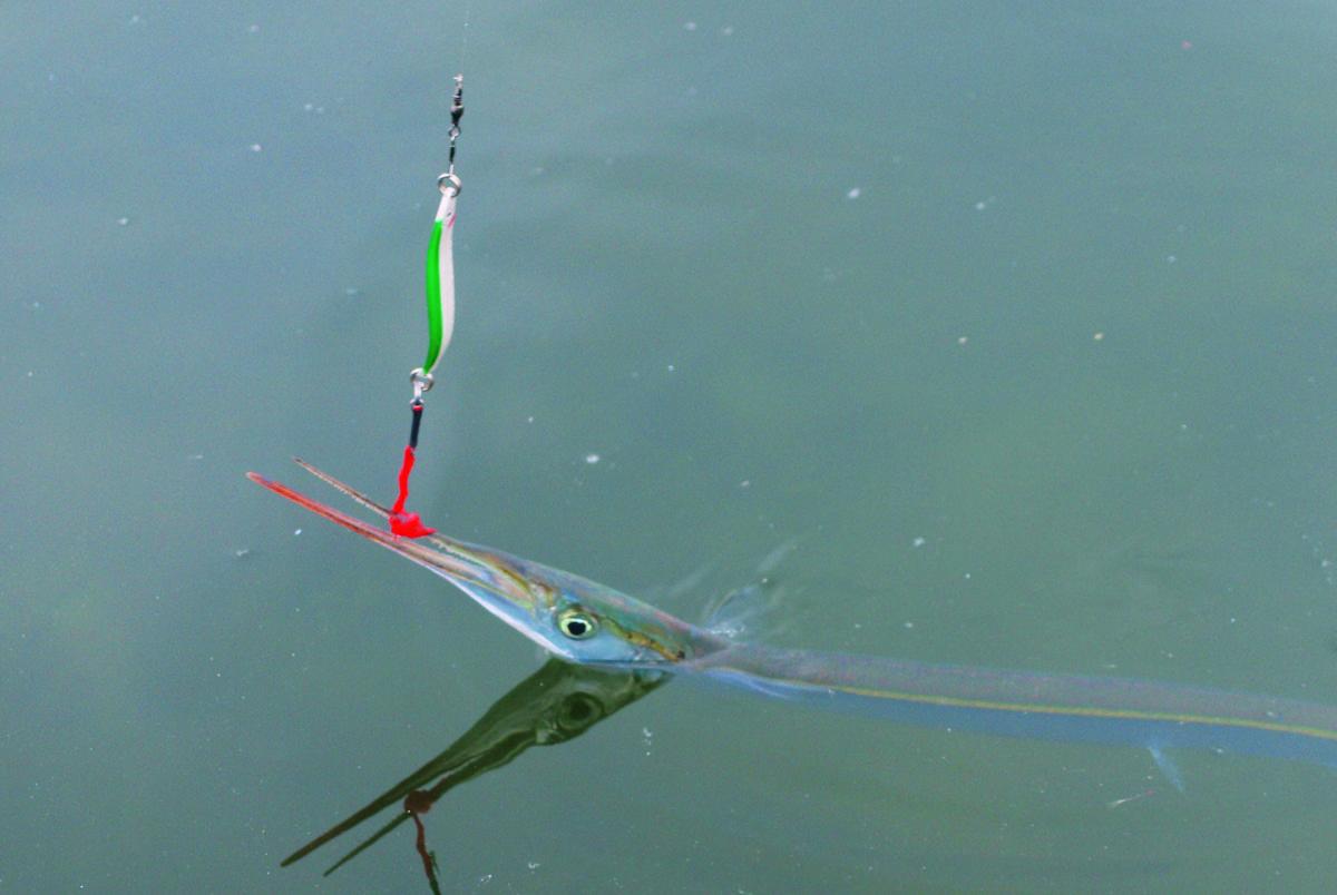 Hornhecht an der Seidenschlaufe. Wer mti den Kunststoff-Fasern anstelle eines Drillings fischt, kommt ohne Haken aus.
