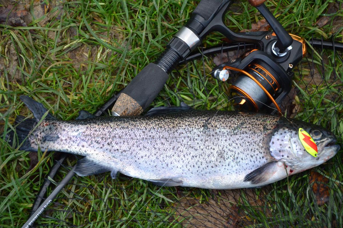 Auch diesmal gilt es wieder, den Fisch möglichst genau zu schätzen. Wie viel mag diese Forelle wohl wiegen? Foto: D. Schröder
