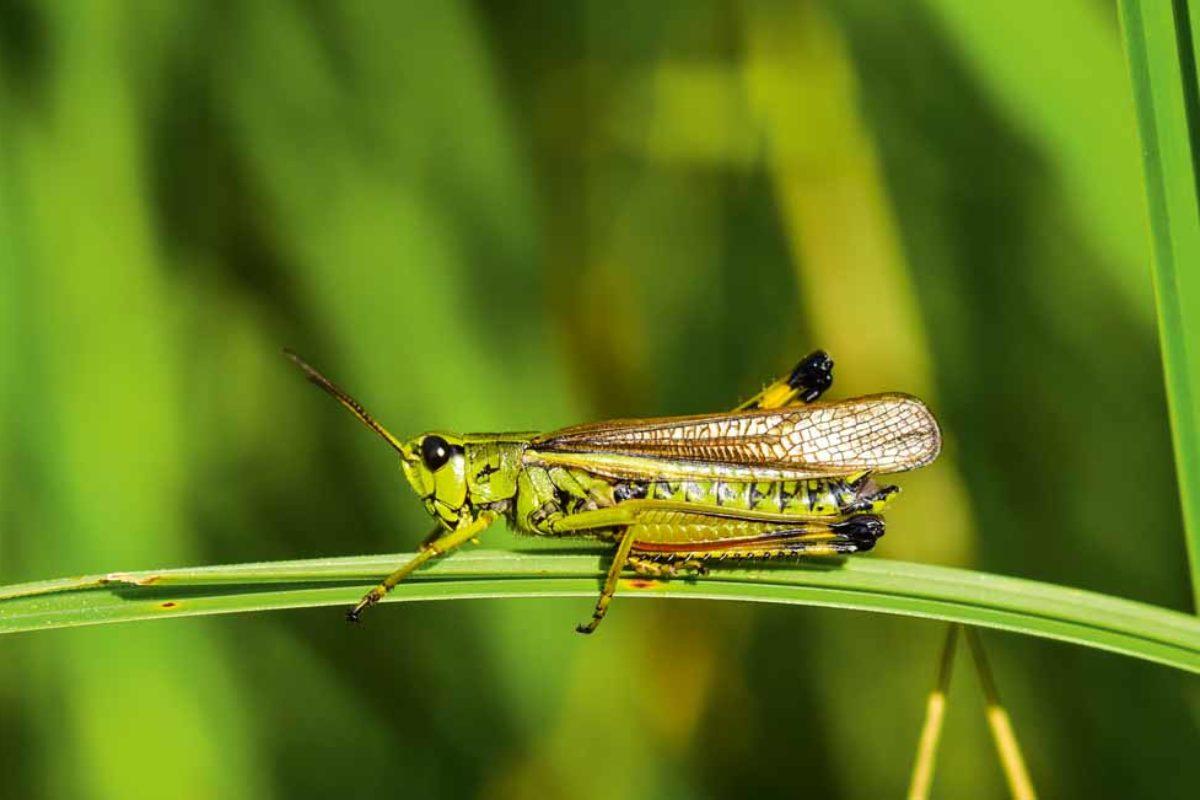 Eine von zirka 800 Arten, die in Europa vorkommt – und sicherlich nicht die hässlichste.