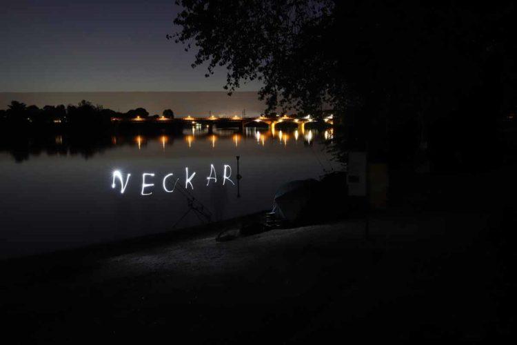 Anfangs war der Neckar eine übervolle Schatzkammer, dann wurden die wärmenden Kraftwerke abgestellt oder heruntergefahren und das Koi-Herpes-Virus raffte einen großen Teil des Bestandes dahin. Mittlerweile aber geht es dem Fluss besser.