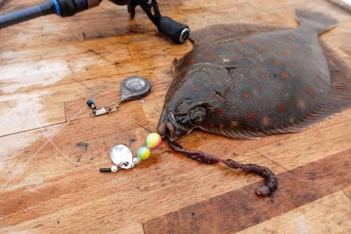 """Plattfische hassen diesen Trick! Um Fehlbisse beim Plattfischangeln zu minimieren, steckt auch im """"falschen"""" Ende des Wattwurms ein Haken. Foto: J. Radtke"""